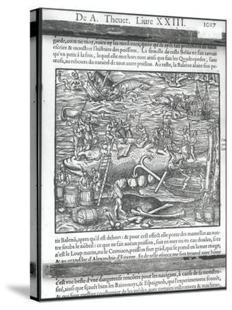 """Jointing a Whale, from """"Cosmographie Universelle"""" by Andre Thevet, 1575"""