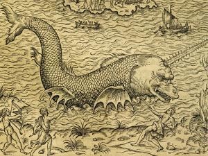 Sea Monster, Engraving from Universal Cosmology by Andre Thevet