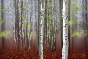 The Birches by Andre Villeneuve