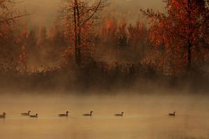 The Parade Of Geese by Andre Villeneuve