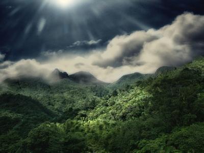 El Yunque National Park by Andrea Costantini