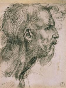 Drawing with Male Profile, in the Uffizi Gallery, in the Gabinetto Dei Disegni E Delle Stampea by Andrea del Sarto