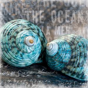 Blue Ocean Shells by Andrea Haase