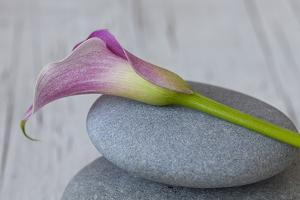 Calla, Flower, Stone, Still Life by Andrea Haase