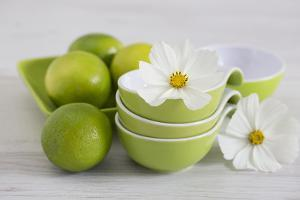 Cosmea, Flower, White, Shells, Lime, Green, Still Life by Andrea Haase