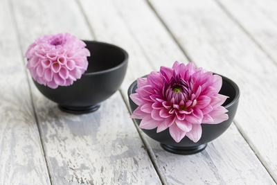 Dahlias, Pink, Shells, Black, Wood