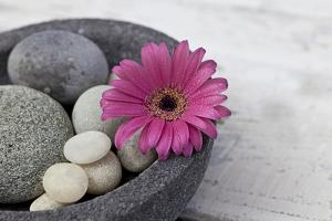 Gerbera Blossom, Shell, Stones by Andrea Haase