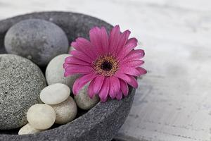 Gerbera Blossom, Shell, Stones by Andrea Haase