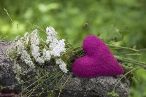 Heart, Pink, Flowers, Wild Chervil, Green by Andrea Haase