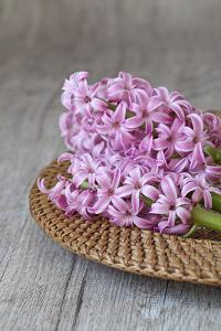 Hyacinth Blossoms in a Basket by Andrea Haase