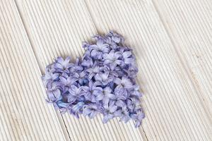 Hyacinth flowers in heart shape, close up, still life by Andrea Haase
