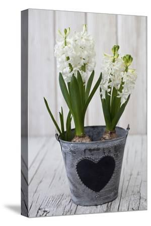 Hyacinths, White, Spring Flower, Flowerpot, Heart