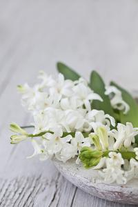 Hyacinths, White, Spring Flowers, Blossoms, Stone Bowl by Andrea Haase