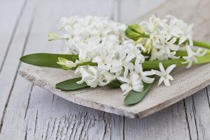 Hyacinths, White, Spring Flowers, Blossoms, Wooden Bowl by Andrea Haase