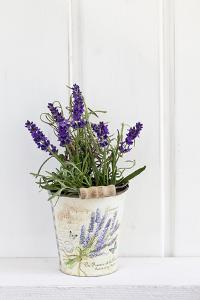 Lavender, Blossoms, Smell, Rivererpot by Andrea Haase