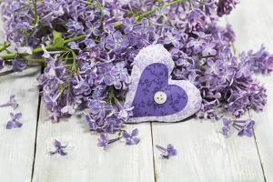 Lilac, Blossoms, Mauve, Violet, Heart by Andrea Haase