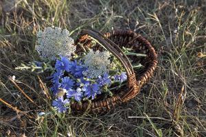 Meadow Flowers in the Basket by Andrea Haase
