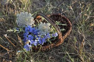 Meadow Flowers in the Basket by Andrea Haase