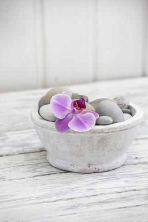 Orchid Flower, Shell, Pebbles