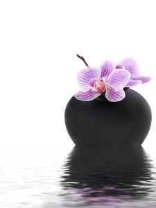 Orchid with Black Vase by Andrea Haase