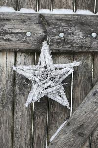 Poinsettia and Age Wooden Gate by Andrea Haase