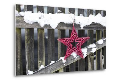 Poinsettia and Old Wooden Fence