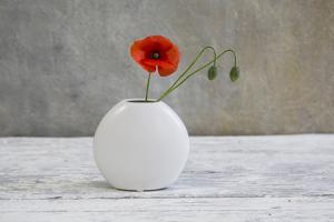 Poppy Blossom and Buds in White Vase by Andrea Haase