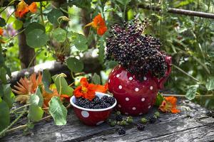 Spotted Crockery and Berries on Old Garden Bench by Andrea Haase