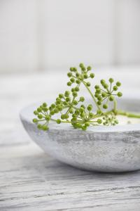 Still Life, Ivy Blossoms, Green, Stone Cup, Grey, White by Andrea Haase