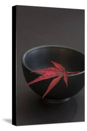 Still Life, Maple Leaf, Red, Bowl, Black, Still Life