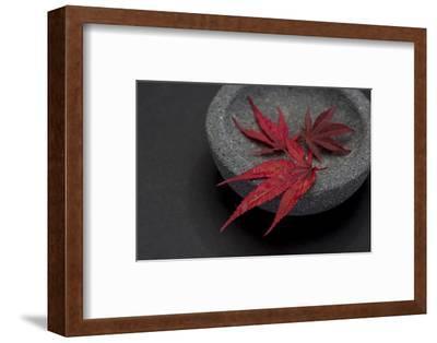 Still Life, Maple Leaves, Red, Shell, Gray, Black, Still Life