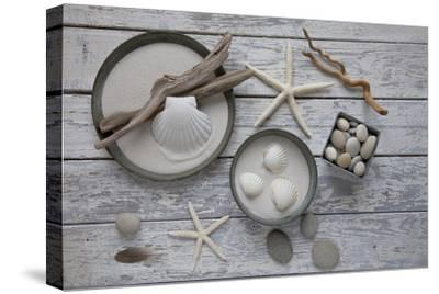 Still Life, Natural Materials, Seashells, Stones, Starfishes, Driftwood