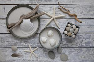 Still Life, Natural Materials, Seashells, Stones, Starfishes, Driftwood by Andrea Haase