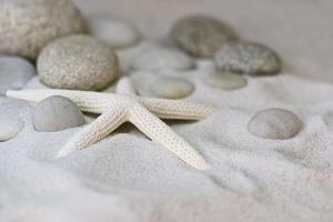Still Life with Starfish by Andrea Haase