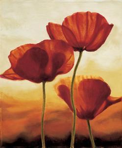 Poppies in Sunlight I by Andrea Kahn