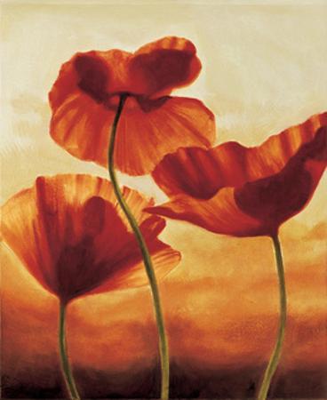 Poppies in Sunlight II
