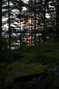 Dusk, wood, shore, Lelång Lake, Dalsland, Sweden by Andrea Lang