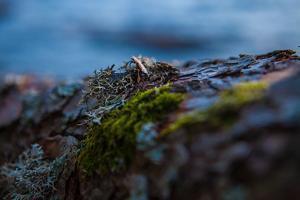 Vegetation on shore, Stora Le Lake, Sweden by Andrea Lang