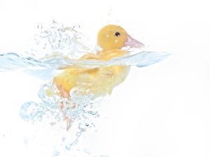 Ducks 001 by Andrea Mascitti