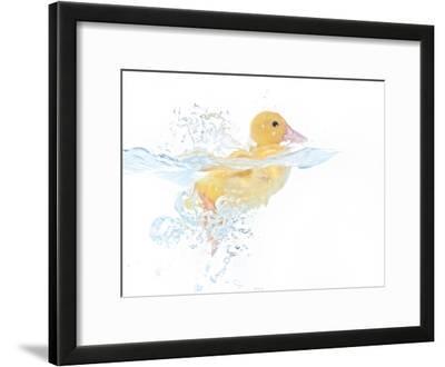 Ducks 001