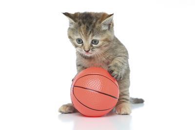 Kittens 009
