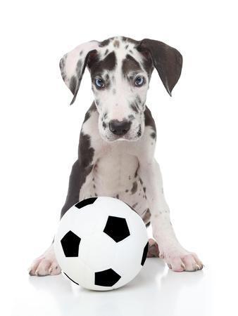 Puppies 036