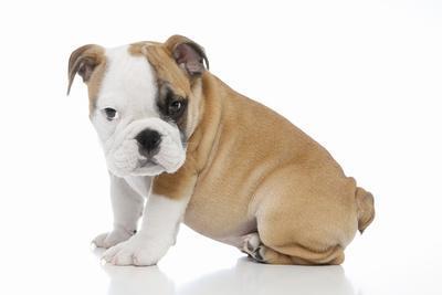 Puppies 056