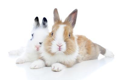 Rabbits 006