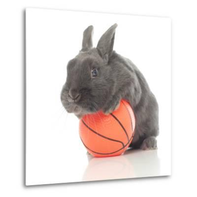 Rabbits 015