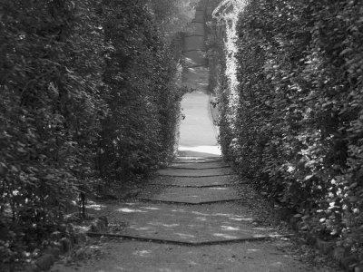 Path with Shrubs at the Boboli Gardens in Florence, Italy