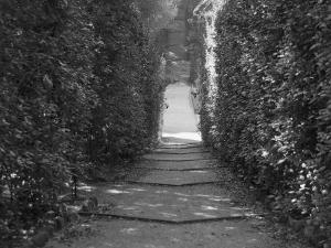 Path with Shrubs at the Boboli Gardens in Florence, Italy by Andrea Sperling
