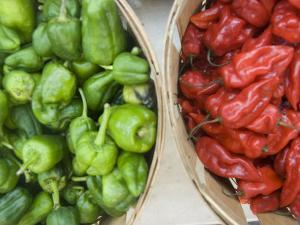 Red and Green Shishito Peppers by Andrea Sperling