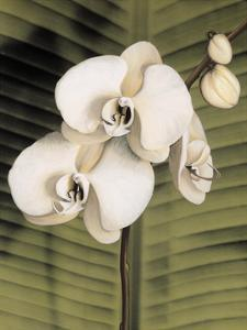 Orchid with Palm II by Andrea Trivelli