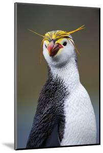 Royal Penguin by AndreAnita
